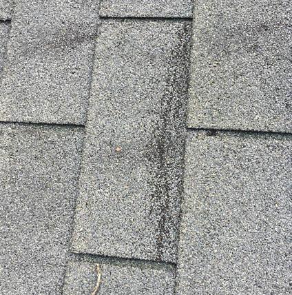 Roof Repair Jacksonville St Augustine Beach Fl Florida